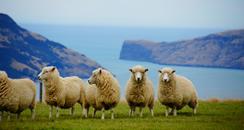 ニュージーランドの留学生活情報