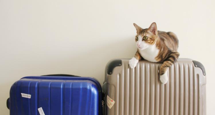スーツケースと猫 ホームステイに便利な持ち物