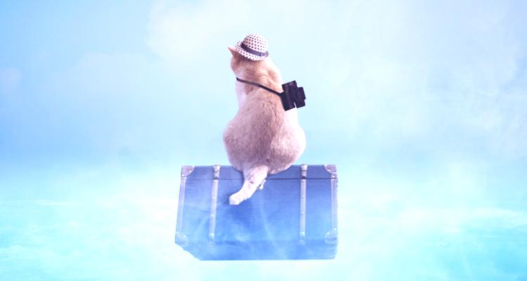 旅に出る猫 短期留学に行く時期