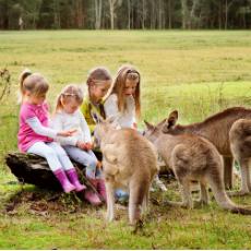 オーストラリア留学・ホームステイ情報
